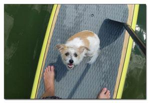 Kentucky Paddleboard Rentals - Contact Us